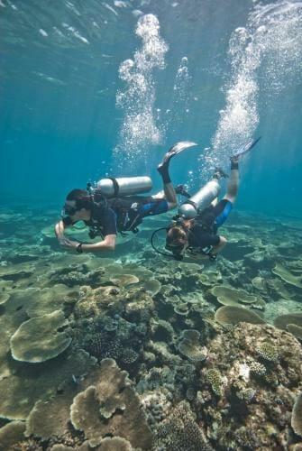 צלילות באיים המלדיביים