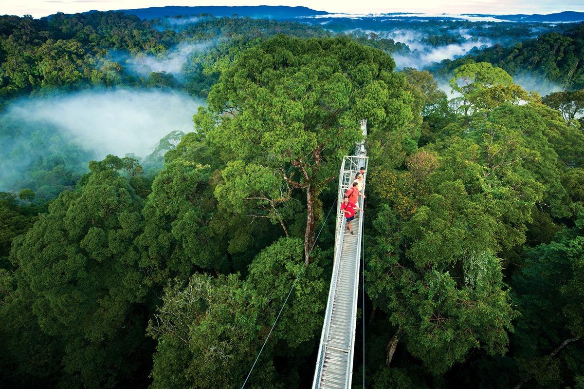 טיול ליער גשם בקוסטה ריקה