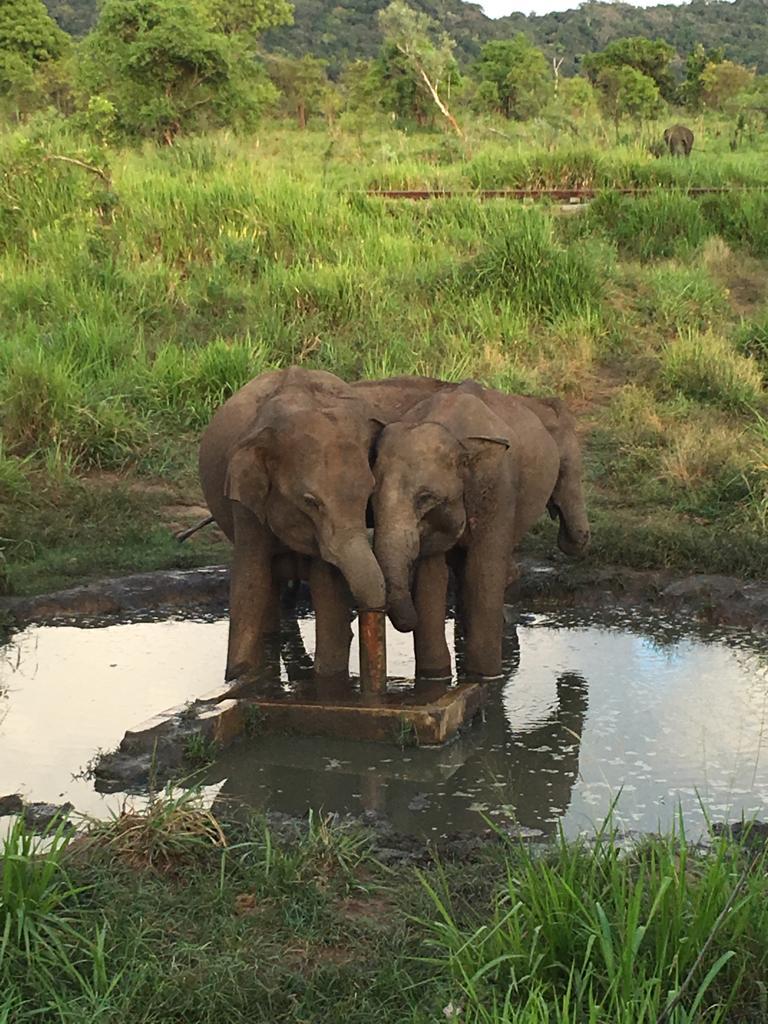 ספארי פילים בסרי לנקה עם יוגה טרוולס